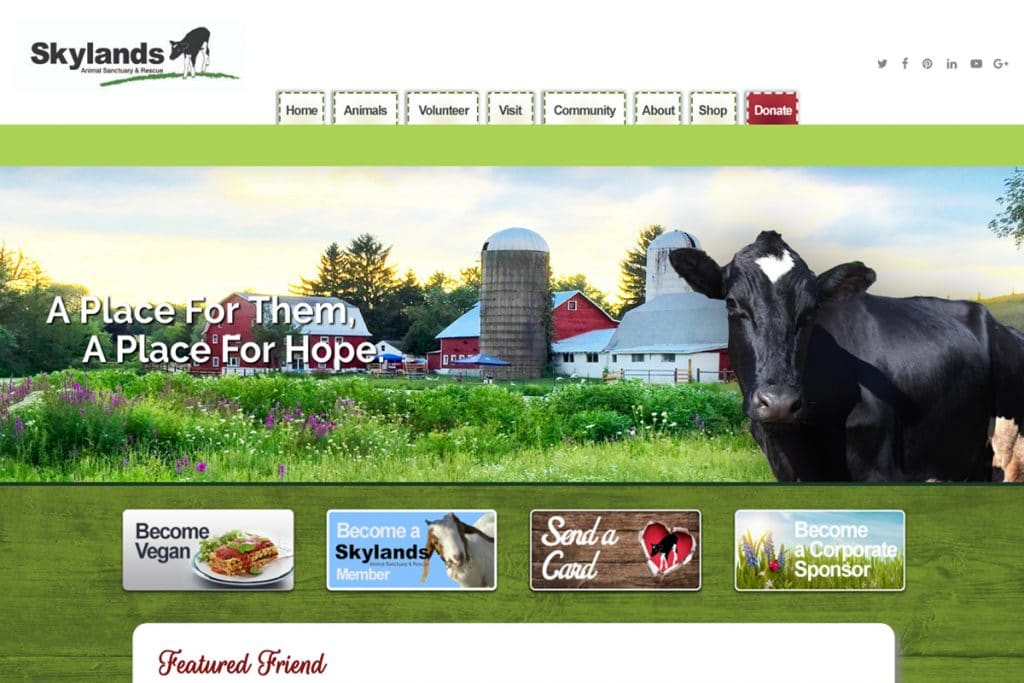 Skylands Animal Sanctuary & Rescue web design web designers near me Web Design for Professionals by Professional Web Designers skylands 1024x683