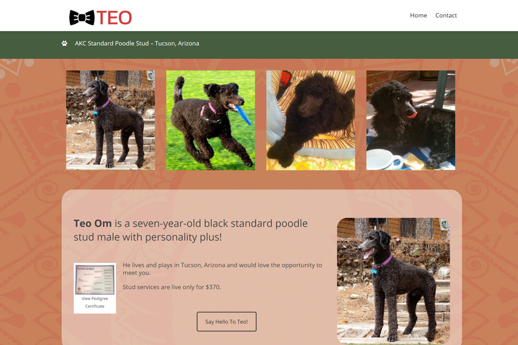 Teo Om web design projects Web Design Projects Teo Om